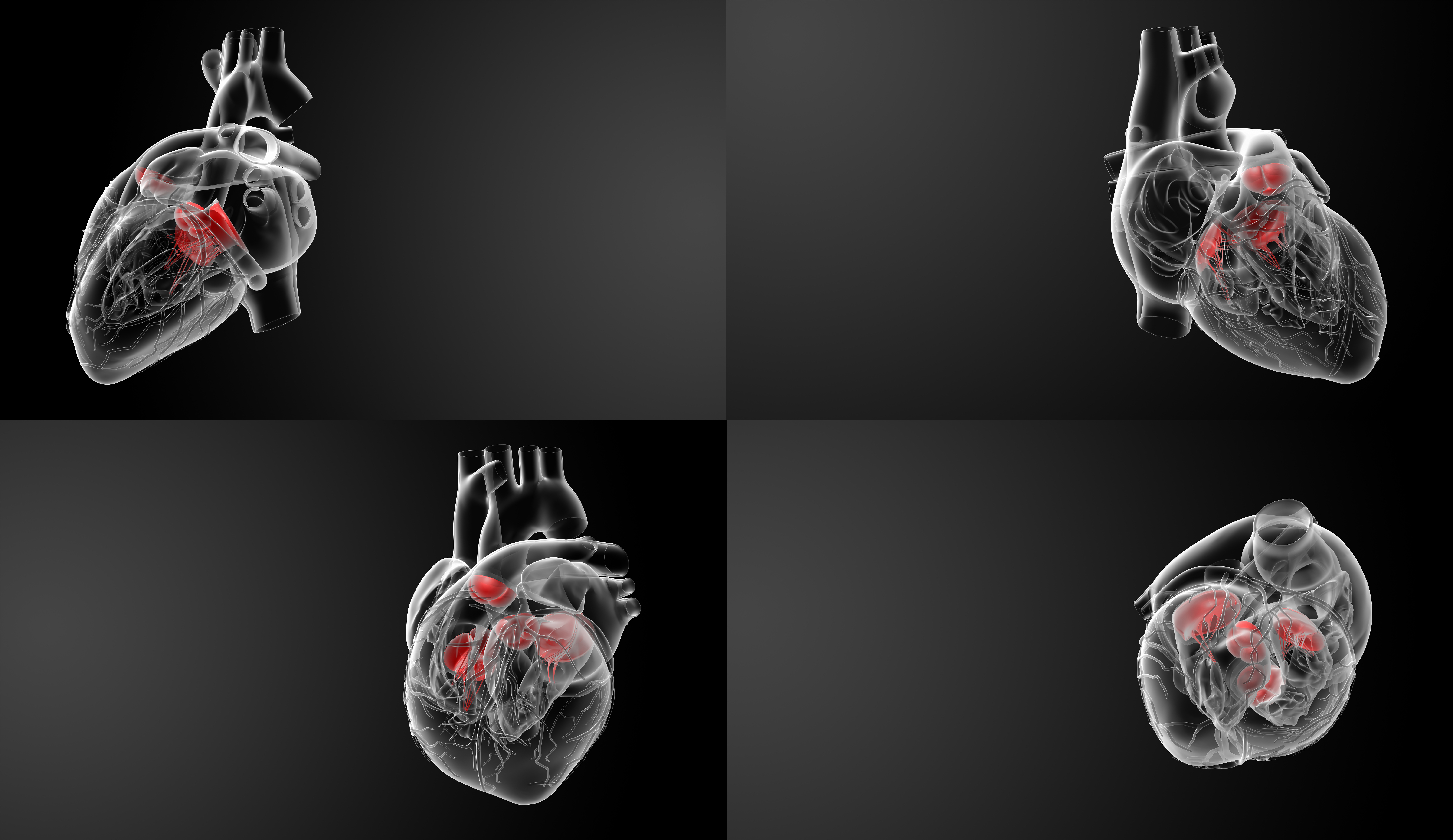 3D rendering of the Heart valve
