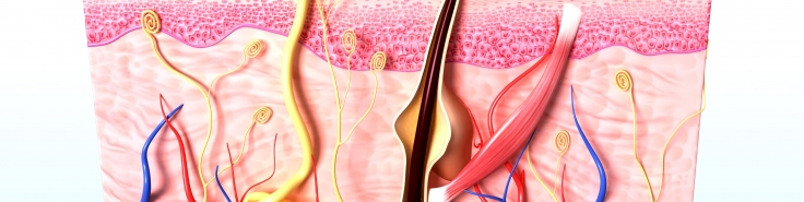 Molecular Underpinnings of Hair Follicles and Sweat Glands ...